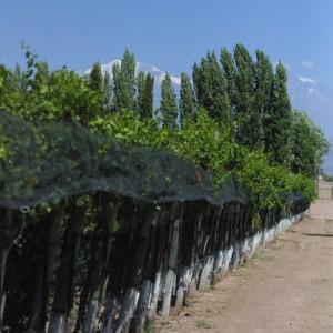 Bodega y viñedos Miguel Minni