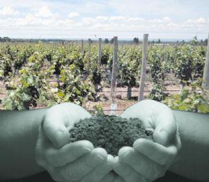 10 terruño futuro del vino argentino
